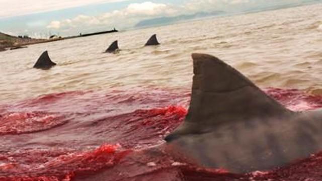 Katastrofa! Letoun na sluneční energii spadl do Tichého oceánu! Pilota sežrali žraloci!
